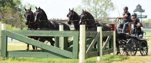 arabo-friesian-four-in-hand-southern-pines-nc (17)
