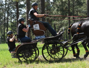 arabo-friesian-four-in-hand-southern-pines-nc (31)